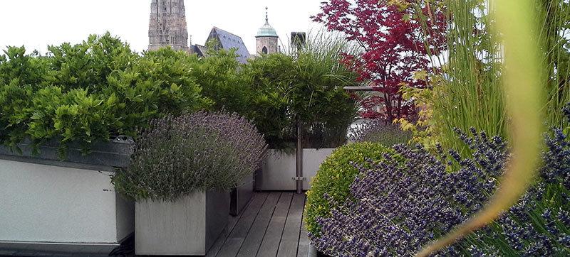 Dachterrassengestaltung  Dachterrassengestaltung: Wir planen Ihren Dachgarten | Pflanzplan