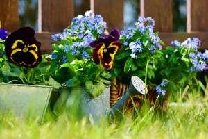 garden-2179571_1920